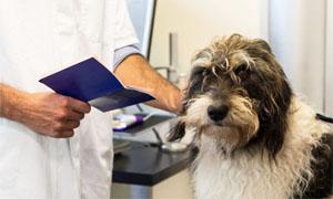medico-controlla-passaporto-cane-300x180