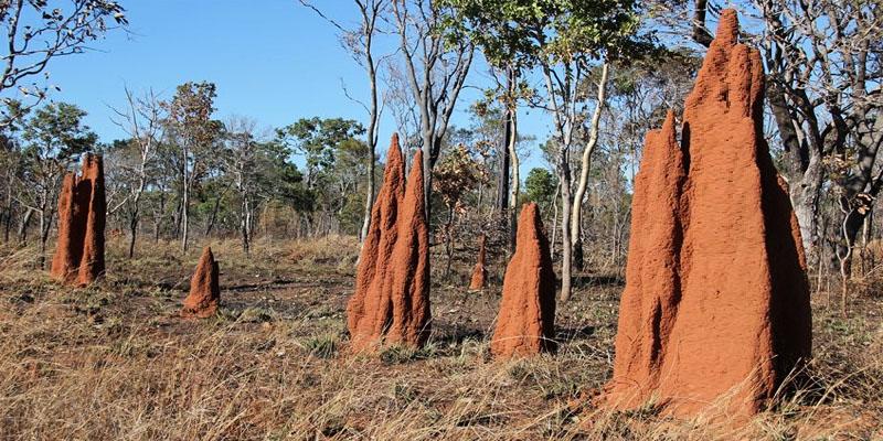 termitai-6-800x400