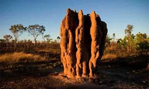 termitaio-2-300x180
