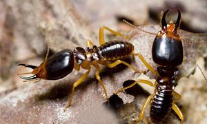 termiti-1-300x180
