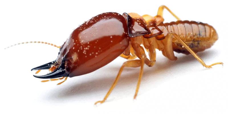 termiti-3-800x400