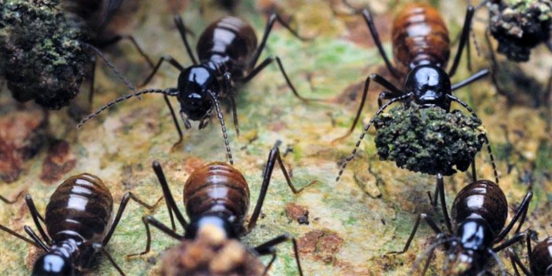 termiti-7-800x400