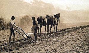 uomini-con-cavalli-arano-3-300x180