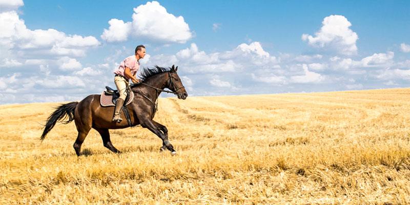 uomo-con-cavallo-2-800x400