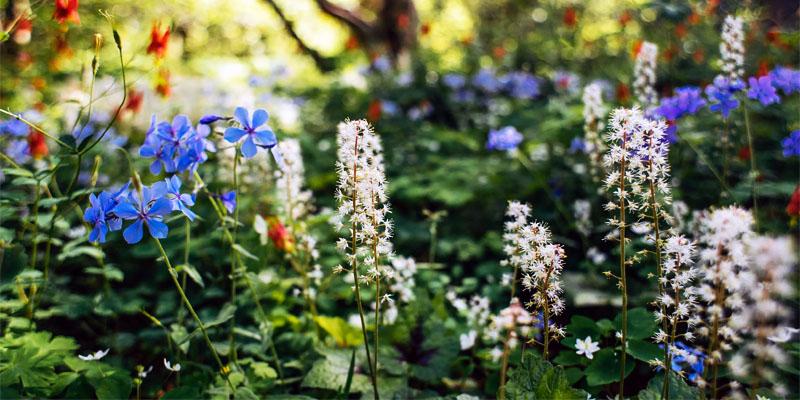 campi-fiori-6-800x400