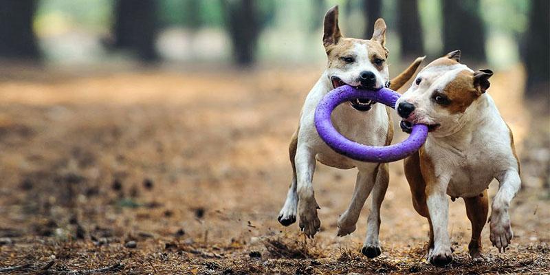 cani-giocano-5-