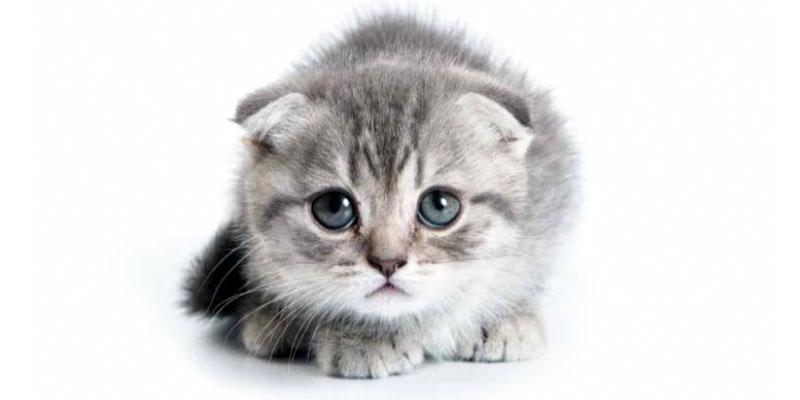 gatto-pauroso-3-800x400