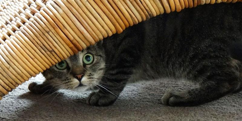 gatto-pauroso-4-800x400