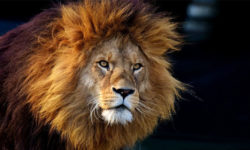 leone-1-800x400