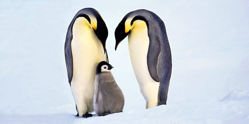 pinguini-800x400
