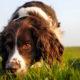 cane-che-annusa-1-800x400