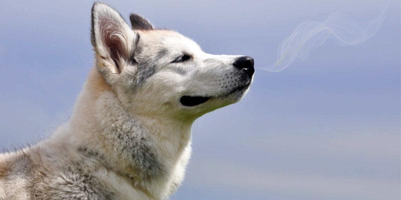 cane-che-annusa-8-800x400