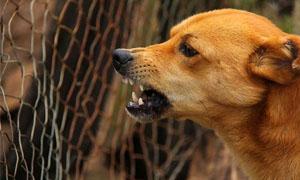 cane-territoriale-3-300x180