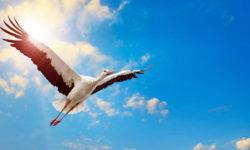 cicogna-bianca-6-800x400
