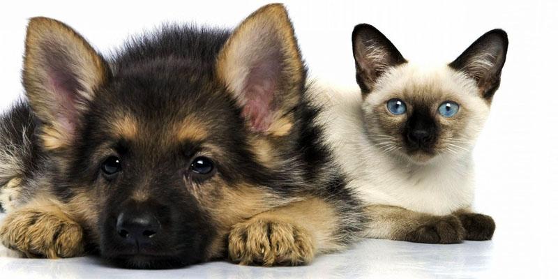 cucciolo-cane-gatto-1-800x400