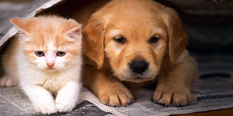 cucciolo-cane-gatto-2-800x400
