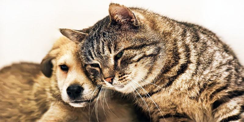 cucciolo-cane-gatto-3-800x400