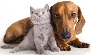 cucciolo-cane-gatto-4-300x180