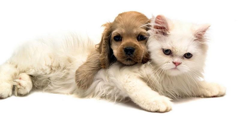 cucciolo-cane-gatto-4-800x400