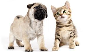 cucciolo-cane-gatto-5-300x180