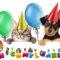 cucciolo-cane-gatto-7-800x400