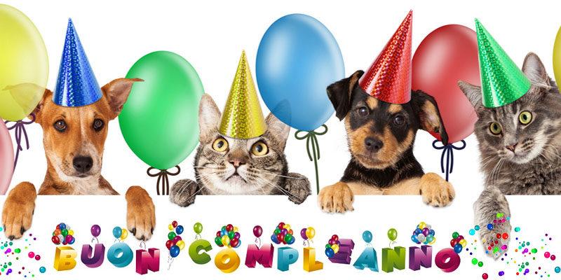 Cani E Gatti Quanti Anni Hanno Come Calcolare La Loro Età Best5it