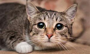 gatto-pauroso-1-300x180