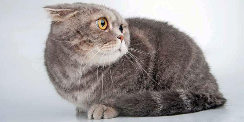 gatto-pauroso-1-800x400