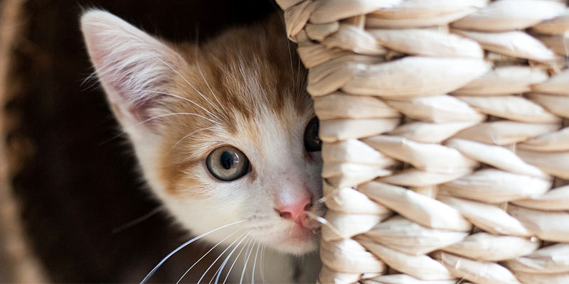 gatto-pauroso-2-800x400