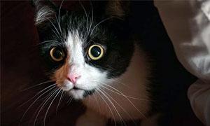 gatto-pauroso-4-300x180