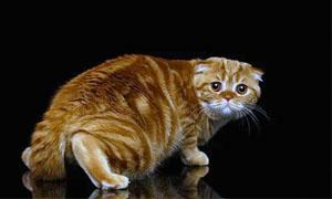 gatto-pauroso-5-300x180
