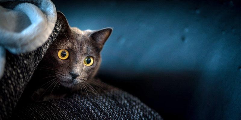 gatto-pauroso-5-800x400