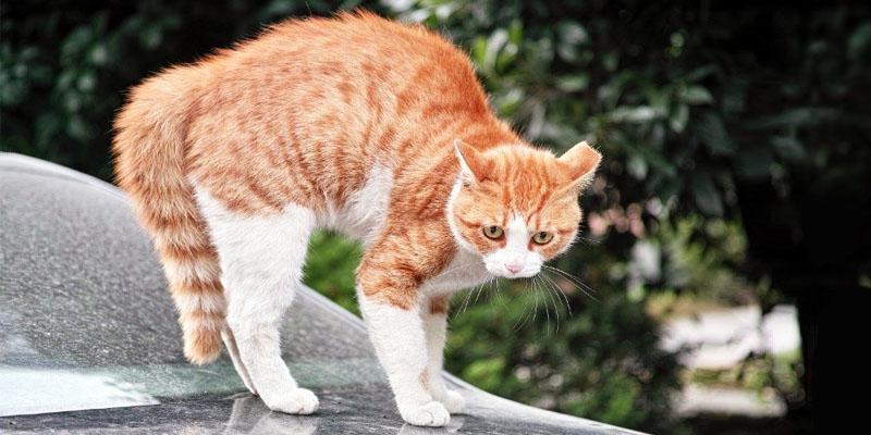 gatto-pauroso-6-800x400