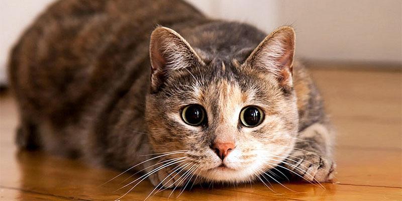 gatto-pauroso-8-800x400