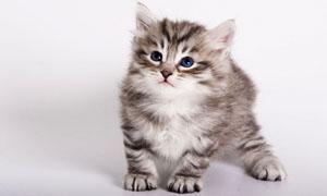 gatto-3-300x180