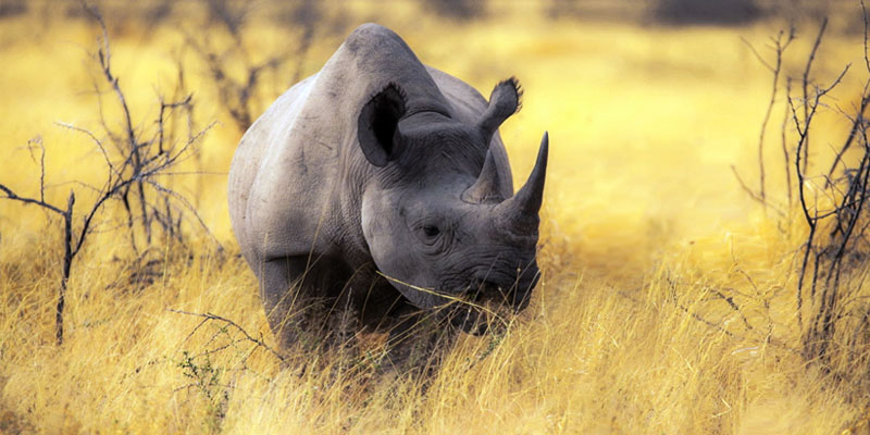 rinoceronte-2-800x400