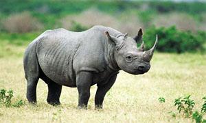 rinoceronte-3-300x180