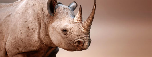 rinoceronte-3-800x400