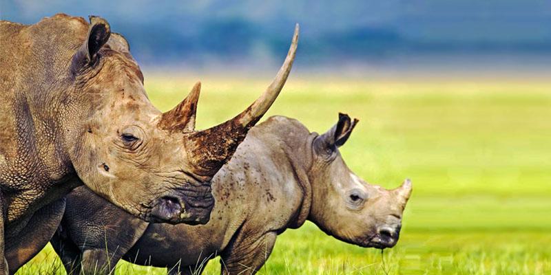 rinoceronte-4-800x400