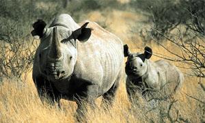rinoceronte-5-300x180