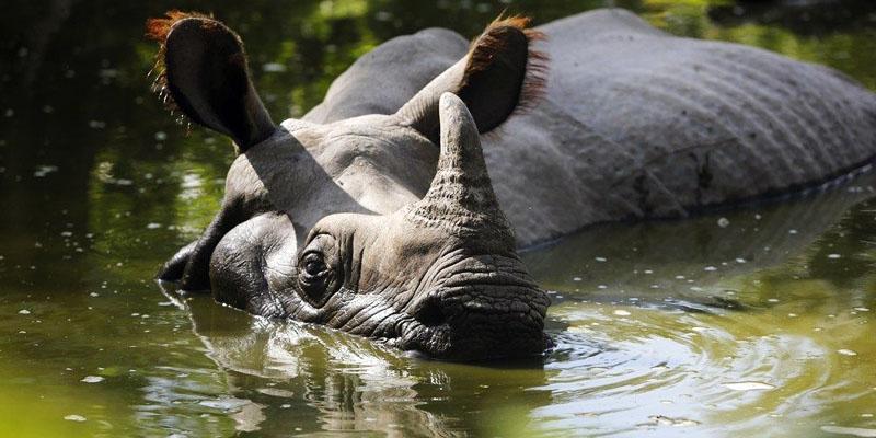 rinoceronte-8-800x400