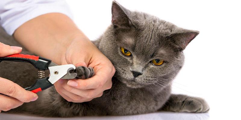 tagliare-unghie-gatto-5-800x400