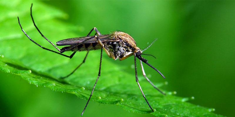 zanzara-1-800x400