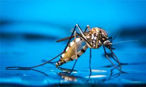 zanzara-2-300x180