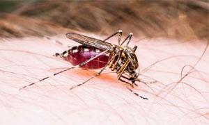 zanzara-4-300x180