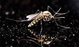 zanzara-5-300x180