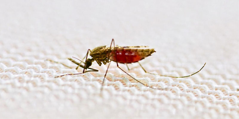 zanzara-5-800x400