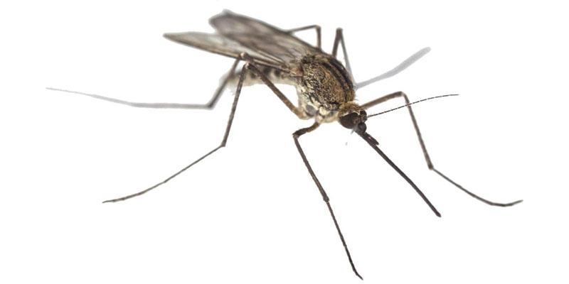 zanzara-7-800x400