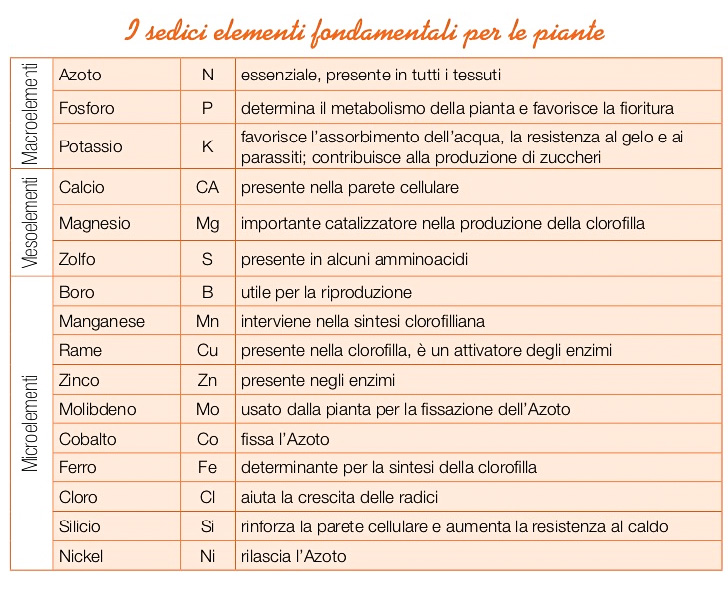 16 elementi
