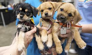 Cani abbandonati3-300x180